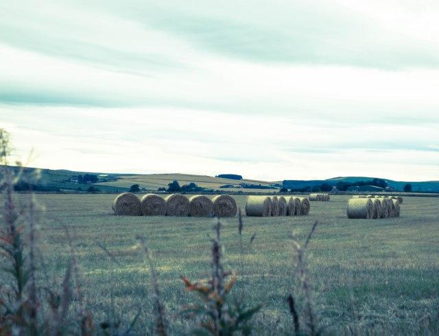 Haystack_one